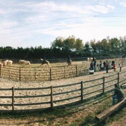 Ranch Sorting 2017