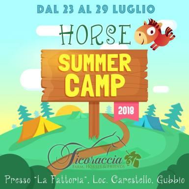 Horse Summer Camp